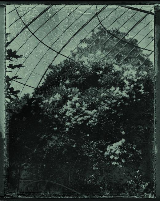 Exposition Alchimies de Sarah Moon au Jardin des Plantes jusqu'au 24 novembre 2013