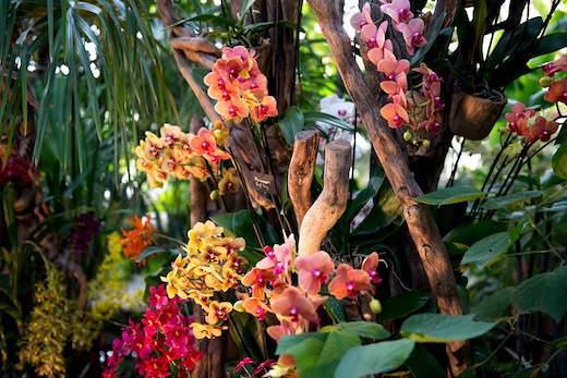 Exposition Mille et une Orchidées au Jardin des Plantes du 8 février au 5 mars 2018