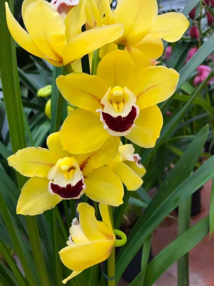 Exposition Mille et une Orchidées au Jardin des Plantes du 14 février au 11 mars 2019