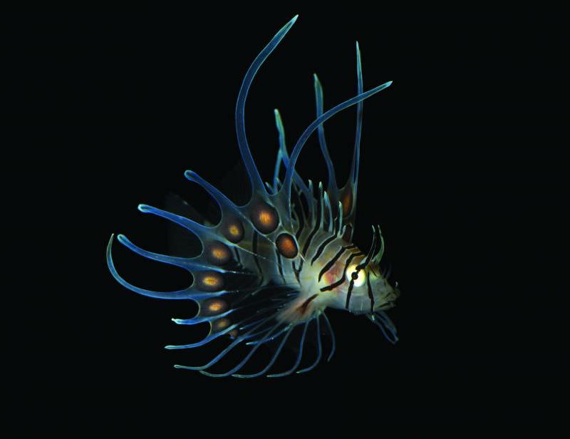 Exposition Océan, une plongée insolite au Muséum national d'histoire naturelle jusqu'au 5 janvier 2020