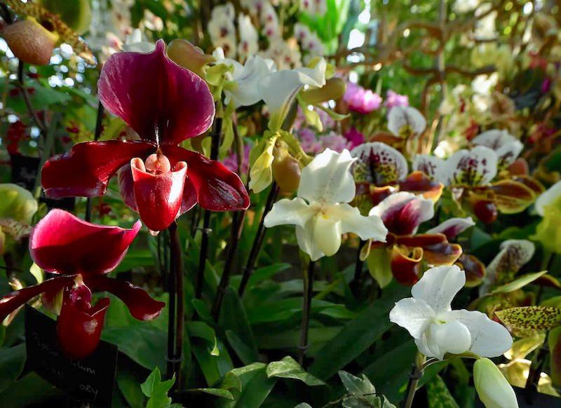 Exposition Mille et une orchidées au Jardin des Plantes du 5 février au 2 mars 2020